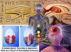 Is it possible that you literally have a third eye that connects you to spiritual dimensions? The pineal gland is something as that is spoken of the in New Age community as being the intuition organ and the connection point between body and spirit, but very few people realize that the pineal gland is in fact a literal eye.
