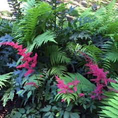 Vibrant Combinations - All For Garden Ferns Garden, Shade Garden Plants, Garden Art, Garden Ideas, Garden Sofa, Garden Oasis, Big Garden, Garden Cottage, Fine Gardening