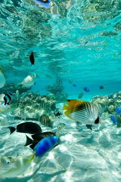 "Writing Prompt: ""The fish circled our legs, as if welcoming us in to their home."" Bora Bora"