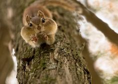 Feeling a little squirrely?