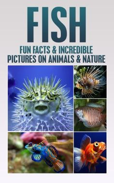 Fish: Fun Facts and Incredible Pictures on Animals and Nature (Children's Books on Animals & Nature), http://www.amazon.com/dp/B00GOKGFNQ/ref=cm_sw_r_pi_awdm_5qi1sb0P2VAAZ