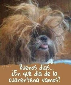 Funny Spanish Jokes, Mexican Funny Memes, Spanish Humor, Spanish Class, Good Morning Inspirational Quotes, Work Motivational Quotes, Good Morning Snoopy, Mafalda Quotes, Grief Poems
