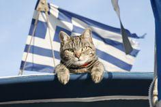 Our friends in Greece! https://www.facebook.com/ngreece.gr