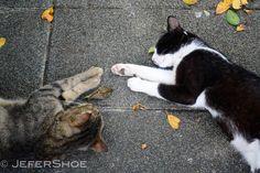 Cat Village/ Taiwan by Jennifer H on 500px