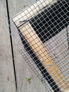 build a grazing box for your chickens
