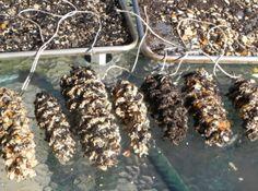 homemade bird feeders | Homemade Wild Bird Feeders with seeds, nuts and dried fruits Recipe ...