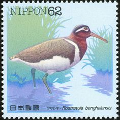 Greater Painted-snipe stamps - mainly images - gallery format