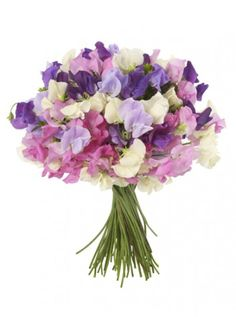 Sweet Peas are a great flower to use for a Spring wedding!