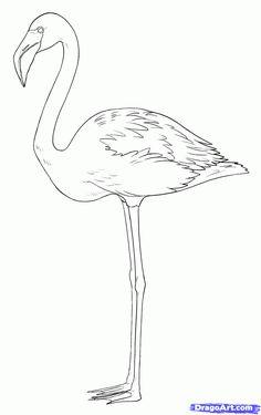 how to draw flamingos step 7