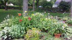 my summer garden  2013