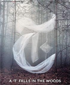 JO METSON SCOTT (photographer) : gothic letter in the trees