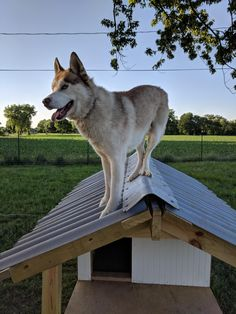 Cool Dog Houses, Snow Dogs, Alaskan Malamute, Dogs Of The World, Beautiful Dogs, Dog Training, Best Dogs, Dog Breeds, Cute Dogs