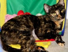 My name is Sassafras. I love to lounge and stretch. I am very nice and I like people to pet my head and scratch my neck. I hope I get a nice home real soon. Come visit me today at HSMC: 2515 14th Street West Bradenton, Florida 34205 Or call: (941) 747-8808 x313 #shelter #dogs #animals #HumaneSociety #Florida #HSMC