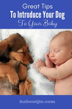 Dogs are amazing pets, there is a reason why we call them man's best friend. But what happens when you have a new baby? Here are some great tips to introduce your dog to your baby.  #guestpost #dogsandbabies #dogs #pets #dogslife #puppylove #doglover #ilovemydog #doglife #introducedogtobaby #dogs_of_instagram #dogoftheday #lovedogs #doglovers #dogscorner #bestwoof  #dog_features  #doggy #puppies  #doglove #lovepuppies