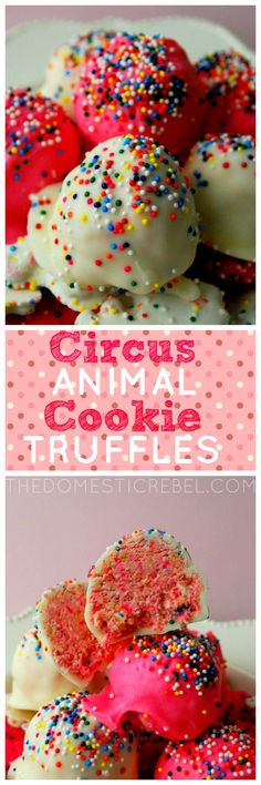 These Circus Animal Cookie Truffles originated on The Domestic Rebel first - crunchy, creamy and sweet, these classic pink and white sprinkle cookies make for a great and festive truffle!