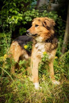 Айко — Animalsburg.ru Анималсбург #собака #собакаищетпомощь #собакаищетдом #собакаищетхозяина