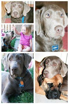 diy home sweet home: ALPO® Dog Food