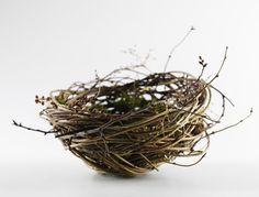 ≗ Feathered Nest of Hope ≗ bird feather & nest art jewelry & decor – nest - Animal Kingdom Willow Weaving, Basket Weaving, Brindille, Nature Plants, Bird Art, Bird Feathers, Bird Houses, Botanical Gardens, Jewelry Art