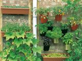 cool vertical garden - they even suggest what plants to buy!  I would love my herbs right near my patio door for quick access from the kitchen!