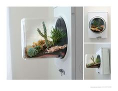 Wow: a terrarium made from an upcycled meter box.
