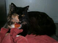 Gaston County NC: Available Pets in Animal Control  Liked · Thursday     213    Year     2013  Tag#    213  Type     CAT  Sex     FEMALE  Breed DOMESTIC SHORT HAIRColorBLACK TORTISHELL  Cage #A5Age 1 yrAdopt/Rescue/ Euthanasia Date 01/24/2013  ADOPTABLEAdmitted Date01/17/2013