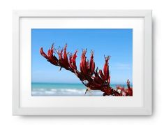 The flower of the Harakeke (New Zealand Flax) against a clear blue New Zealand summer sky and a distant out of focus sea. New Zealand Flax, Out Of Focus, Photography For Sale, Summer Sky, Moose Art, Bloom, Sea, Canvas, Flowers