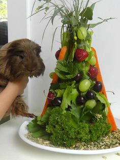 Cavy Christmas tree #guineapigs, love this... #guineapigs #