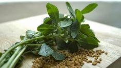 Fenugreek, the forgotten Greek herb