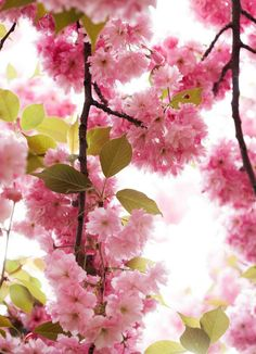 When I am old I shall live in a garden of pink and dine on sunshine.