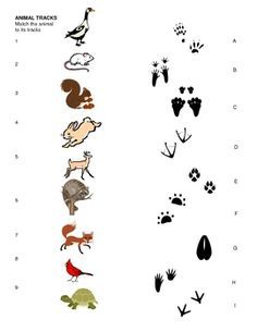 Animal Tracks Matching Sheet for pre-k, kindergarten, Art Activities, Toddler Activities, Cub Scouts Wolf, Bushcraft Skills, Bushcraft Gear, Bushcraft Camping, Animal Footprints, Animal Tracks, Outdoor Education