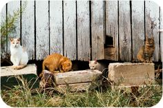 #barn #cats come in every shape, size and colour! Notecard courtesy on Small Things