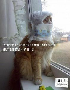 """""""Diaper? What diaper? I have on a helmet! I am Sir Garfield!!! Take me to your lasagna before I impale you!"""""""