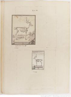 Squelette de daim, Figures pour l'histoire des quadrupèdes, par M. de Buffon.. Tome II / Déssins [sic] originaux par DeSeve et Buvée, avec les Gravures des Editions in12 et in4° vol. 5 à 7.   1755-1758