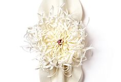 I adore a well-set table....these napkin rings would add whimsy to a formal table!  Spider Mum Napkin Ring