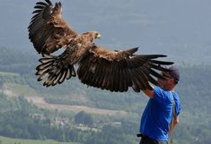 ZDF Dokumentation Videodreh Seeadler Greifvogelwarte Kärnten Birds Of Prey, Bald Eagle, Animals, Movie, Pictures, Golden Eagle, Kestrel, Alexander The Great, Animales