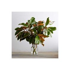 Williams-Sonoma Magnolia Branches ($15) ❤ liked on Polyvore featuring home, home decor, green centerpieces, magnolia home decor, green wreath, magnolia leaf wreath and magnolia wreath