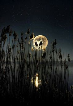 ..by the lake with the Moon