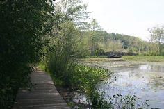 Waterfowl Pond is a great spot for finding boardwalks, bogs, and bridges. #IpswichRiverWildlifeSanctuary #Massachusetts #hiking #pond #wetland #boardwalk #bridge