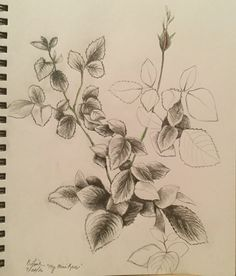 """From the Garden""....graphite with touches of colored pencil Barbara Fine"
