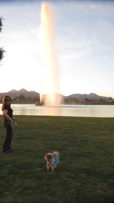 the fountain in fountian hills #BellaBooBear