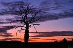 L'arbre mort by Franky Casal on 500px