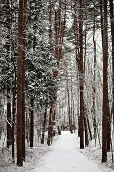 Walk in the woods in the Winter. Hear silence except for the crunch of your boots in the snow. Winter Love, Winter Snow, Snowy Woods, Winter Magic, Pacific Crest Trail, Landscape Photos, Landscape Paintings, Landscapes, Walk In The Woods