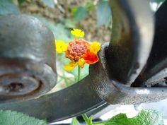 Flor enmarcada por el hierro