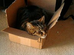 Giblet sleeping in a box