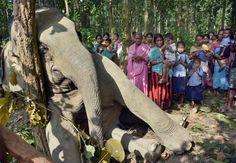 INDIA: Un niño reza cerca de un elefante muerto en Bagulamari, en Goalpara en el estado oriental indio de Assam. El elefante murió cuando un árbol desarraigado que tenía que comer, cayó sobre una torre eléctrica justo después de la medianoche del martes, el resto de la manada de elefantes intentaron ayudarlo pero tenían miedo por las sacudidas eléctricas y finalmente tuvieron que abandonarlo. (AP)