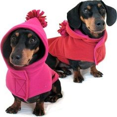 Annie's Sweatshop makes the best coats and accessories - specializing in those for dachshunds. Love her creations!