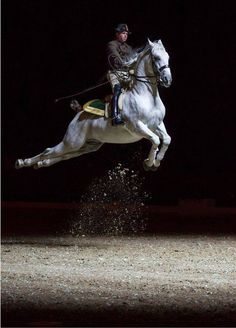 Great photo of a Lipizzaner doing a capriole. This movement takes years of dedicated training, and is considered the most difficult of the airs above the ground.