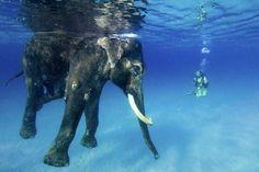 Elephant water pool