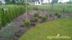 W basiowie - kiedyś tu będzie ogród... - strona 10 - Forum ogrodnicze…