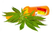 Does CBD get you high? CBD and THC are both derived from the cannabis plant, but they're very different. Learn about CBD oil effects and its medical benefits. Medical Marijuana, Marijuana Plants, Cannabis Oil, Cannabis Growing, Cancer Cure, Over Dose, Herbalism, Herbal Tinctures, Drugs